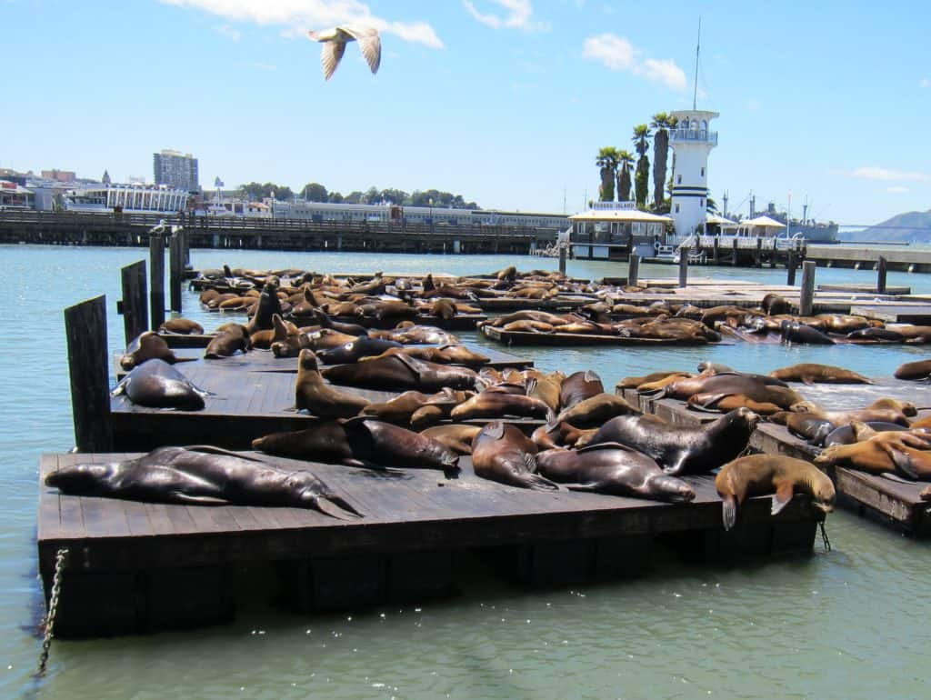 11 Fun San Francisco Attractions: Pier 39