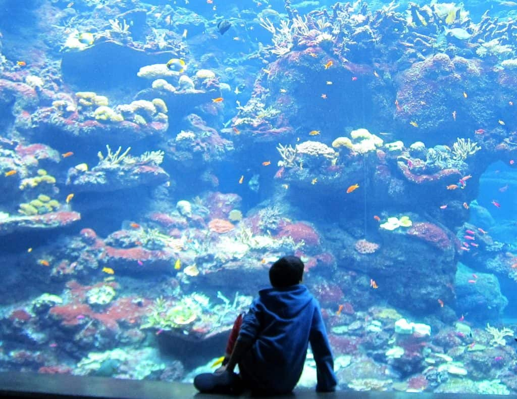 Enjoying the aquarium in the Academy of Sciences. One of the best Fun San Francisco Attractions, even if somewhat expensive.