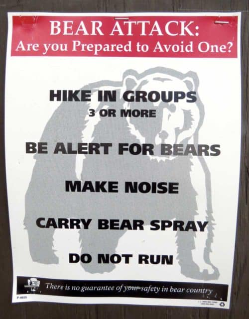 Visiting national parks in bear areas? Educate yourself about bear safety