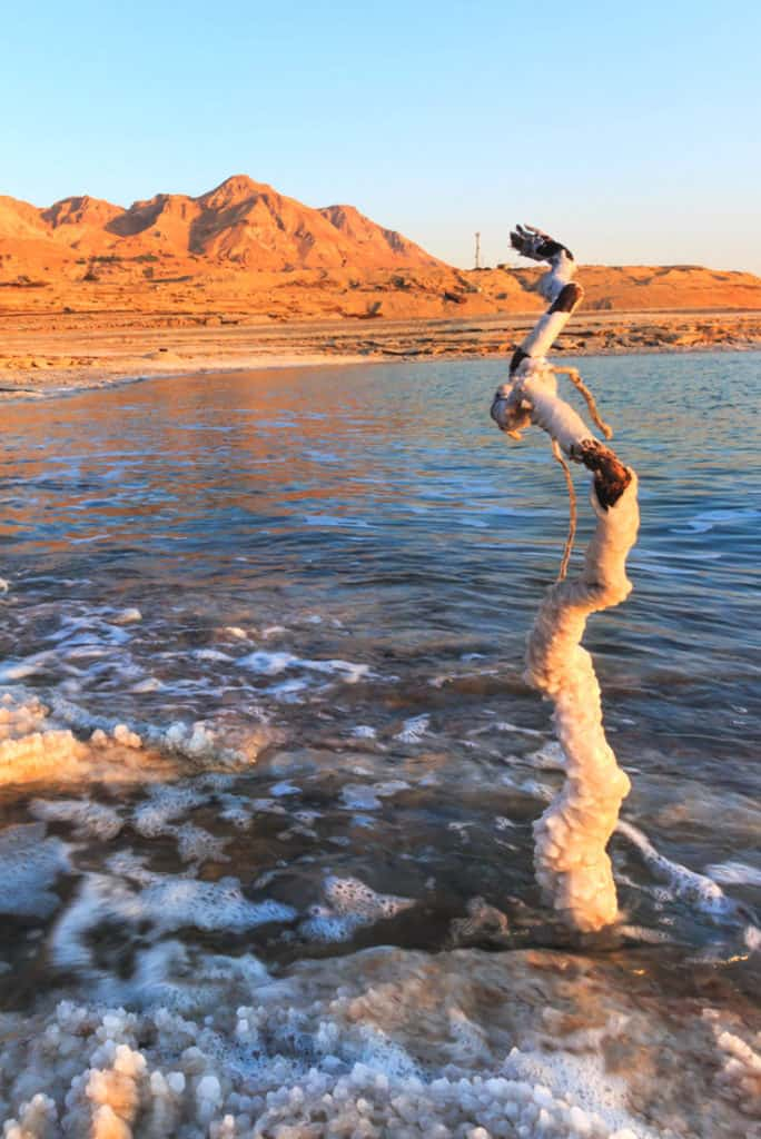 Salt-encrusted branch in the Dead Sea