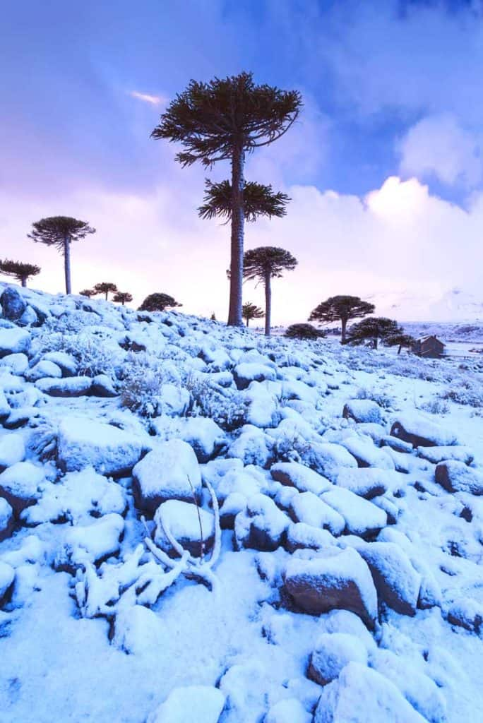 19 Stunning Photos Of Patagonia: Provincial Park of Copahue - Caviahue. Patagonia, Argentina.