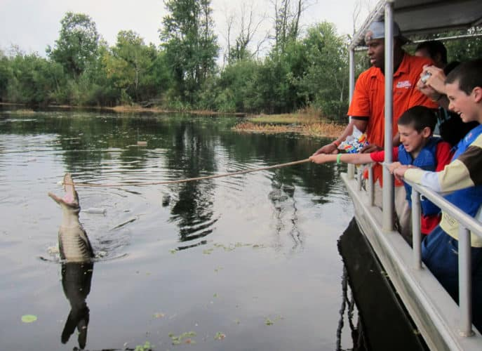 Visiting the swamps of Louisiana with kids: Feeding alligators