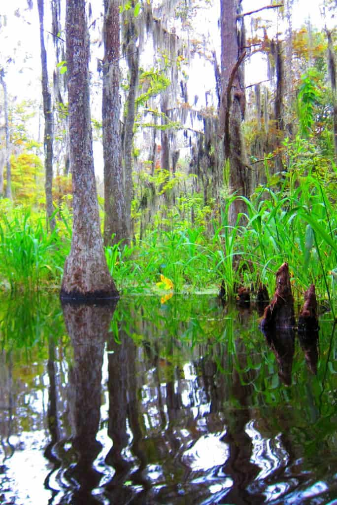 Visiting The Swamps Of Louisiana With Kids 6 Useful Tips