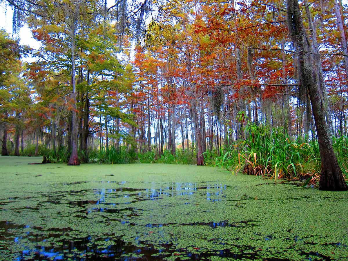 6 tips for Visiting the swamps of Louisiana with kids: Take a swamp tour. This was taken during our Swamp tour of Honey Island.