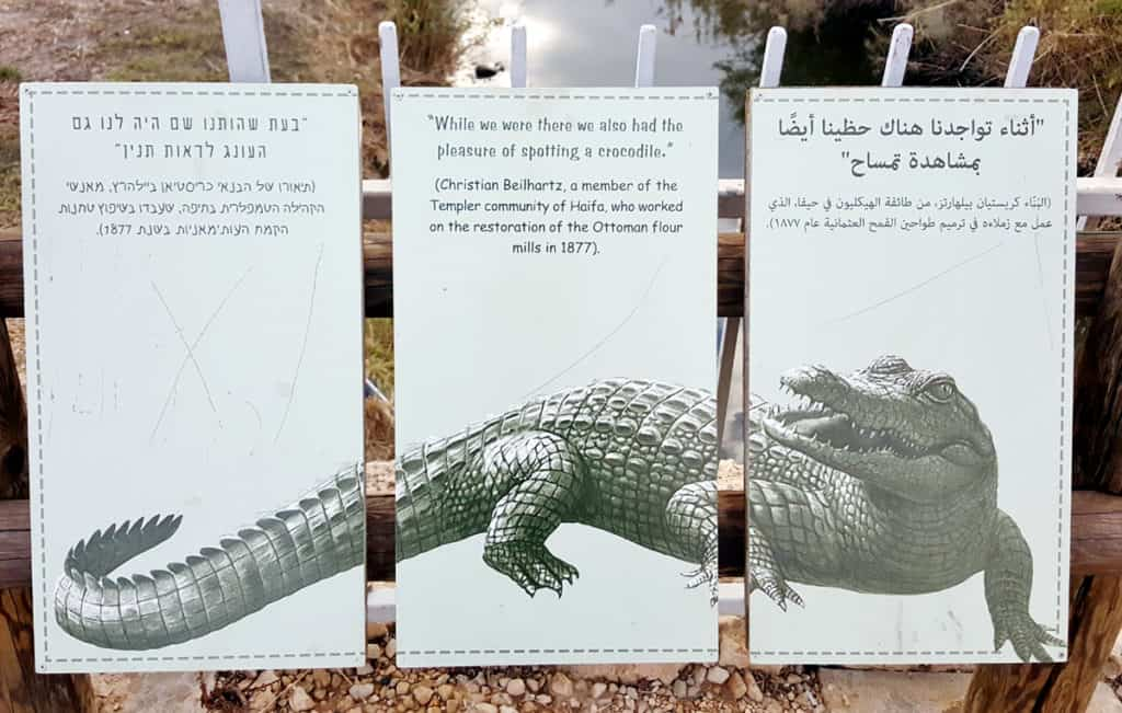 Visiting Nahal Taninim in Israel: where the crocodiles used to live!