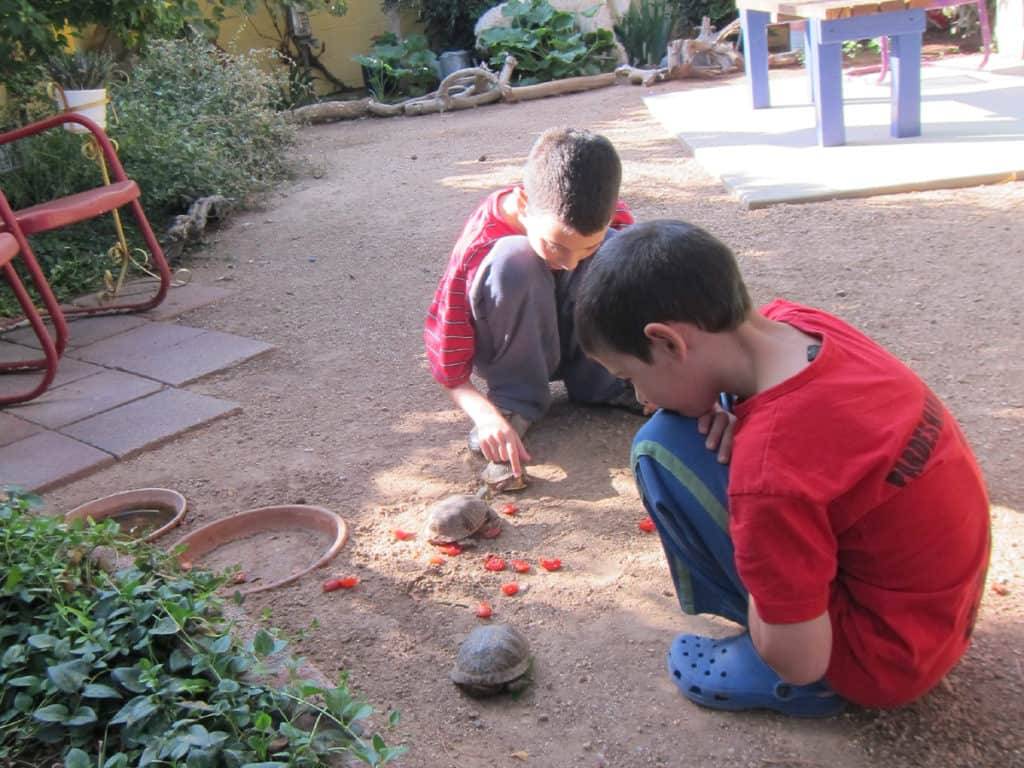 Feeding the turtles at our Albuquerque host's backyard