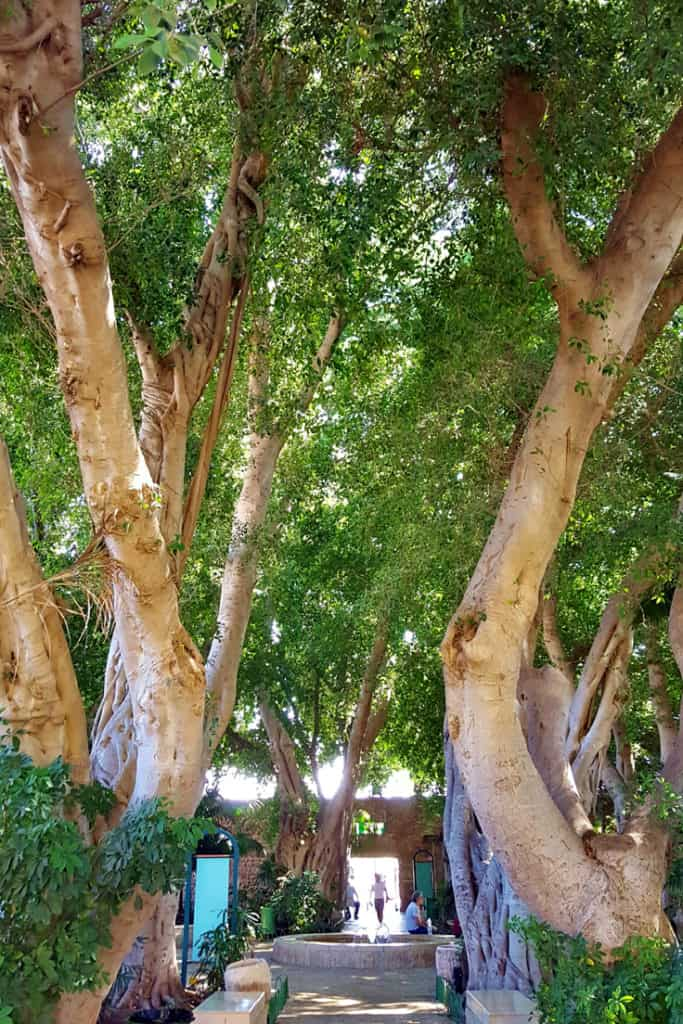 9 Awesome Things to Do in Akko, Israel: The Magical Garden