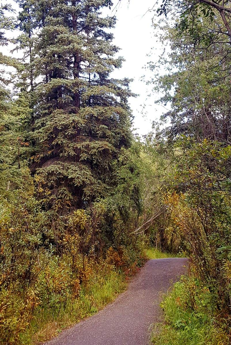 Hiking trail near Denali National Park visitor center