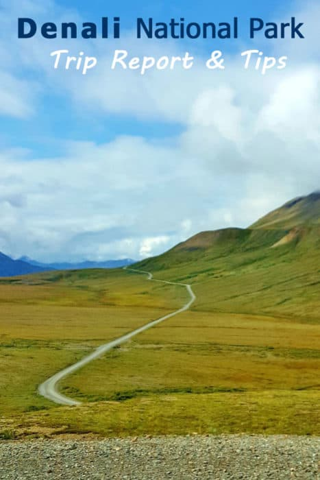 Visiting Denali National Park - Trip Report & Tips