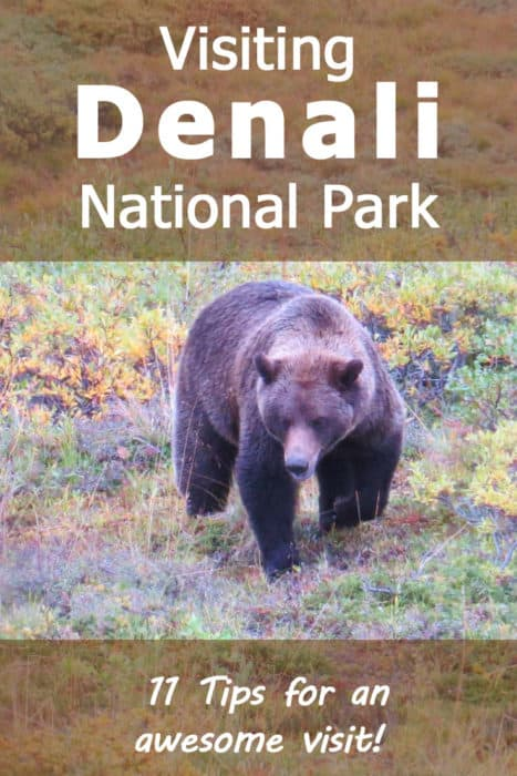 Visiting Denali National Park - 11 Tips for an Awesome Visit