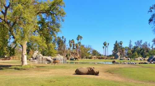 Read more about the article 11 Fantastic Reasons to Visit the Fresno Chaffee Zoo