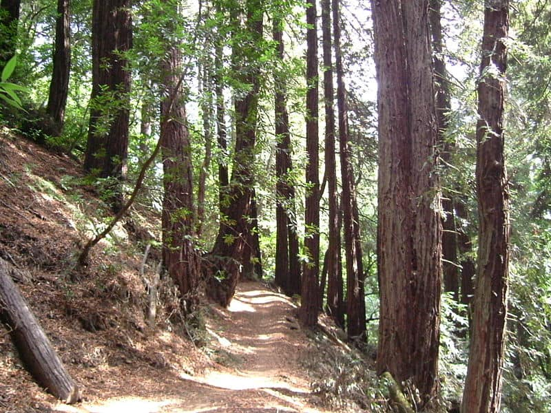 Redwood Regional Park in Oakland, California