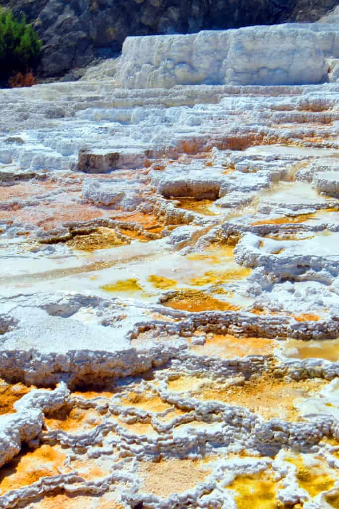 10 Top things to do in Yellowstone National Park: Mammoth Terrace