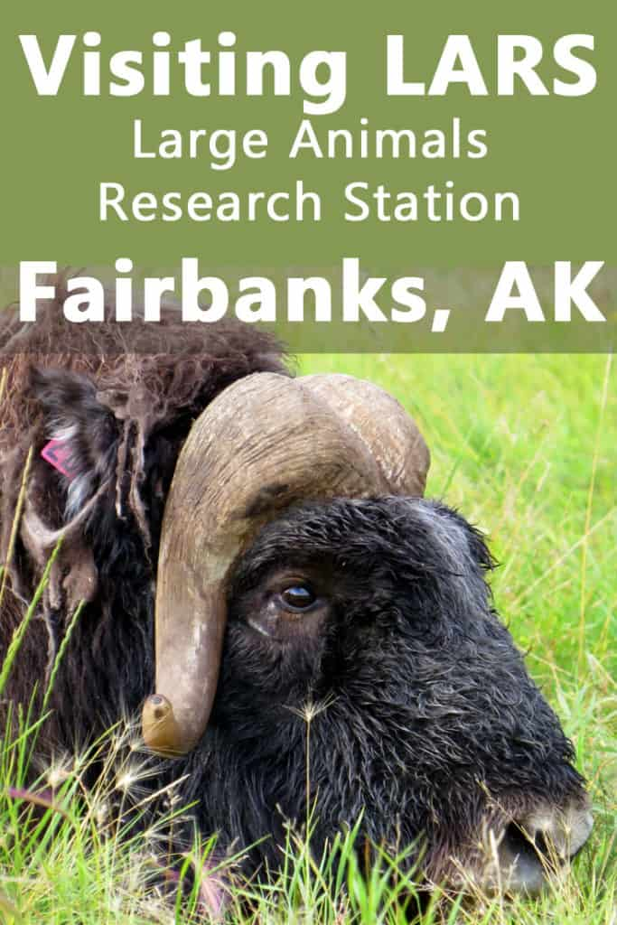 Visiting LARS - Large Animal Research Station in Fairbanks, Alaska