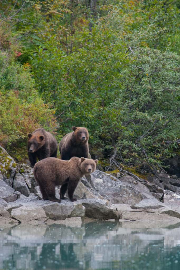 Alaska National Parks Guide: Katmai Falls National Park