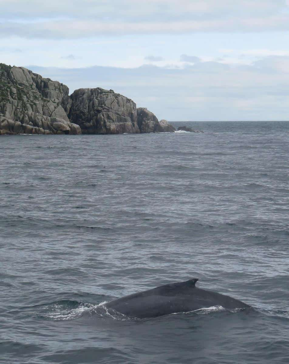 Our whale viewing