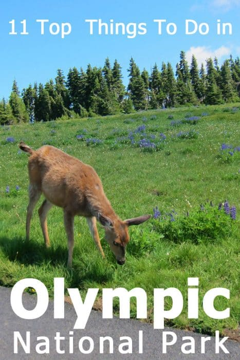 11 Top things to do in Olympic National Park, WA - Tips and ideas from our own experience and research