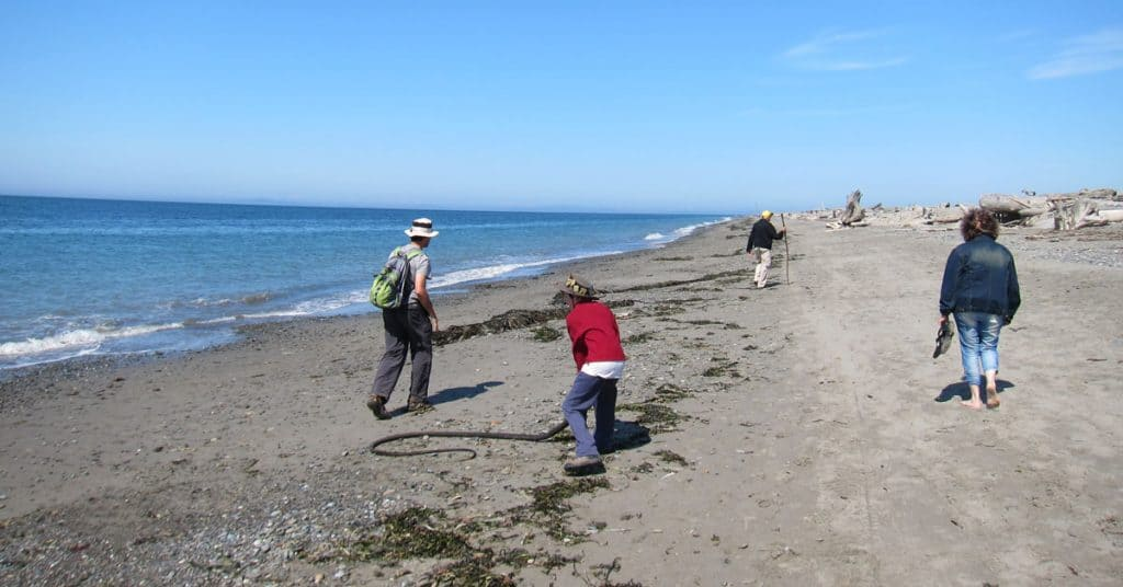 Hiking The Dungeness Spit