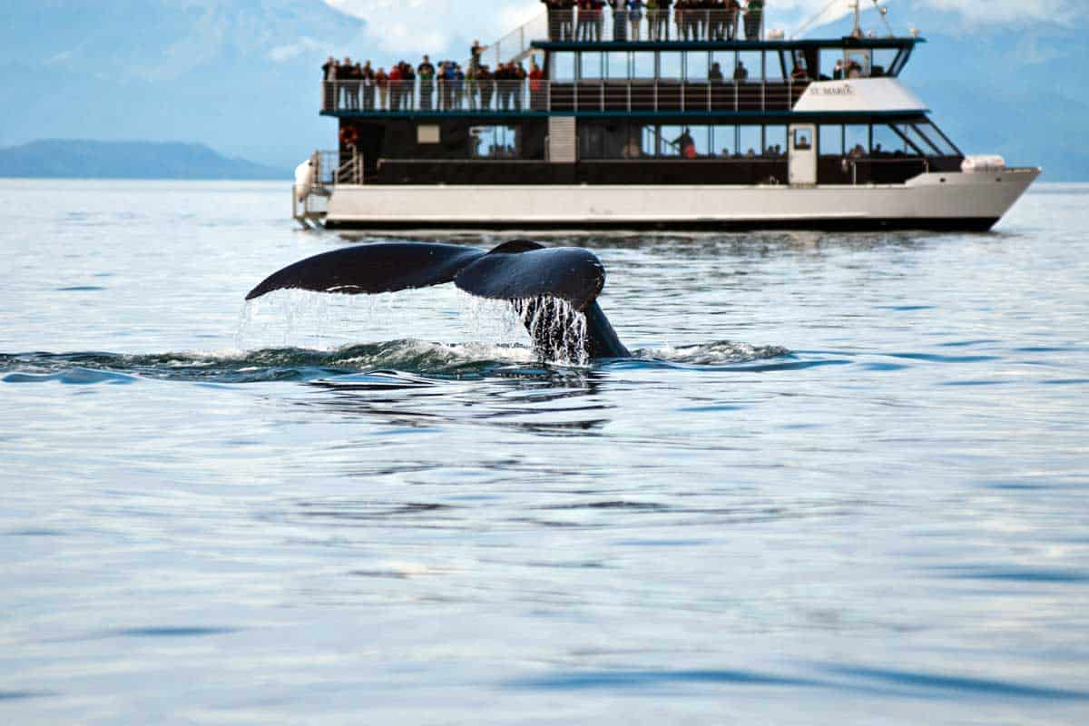 When is the Best Time to See Whales in Alaska?