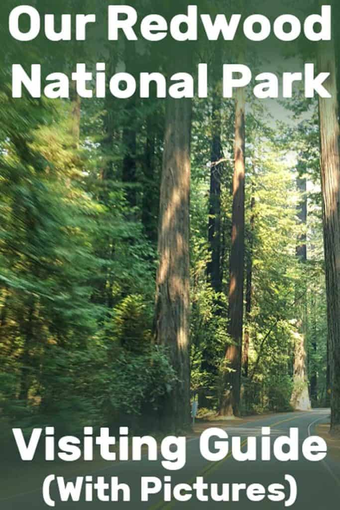 Our Redwood National Park Visiting Guide (With Pictures!)