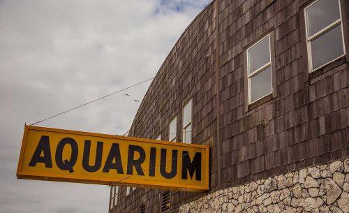 Seaside Aquarium Oregon