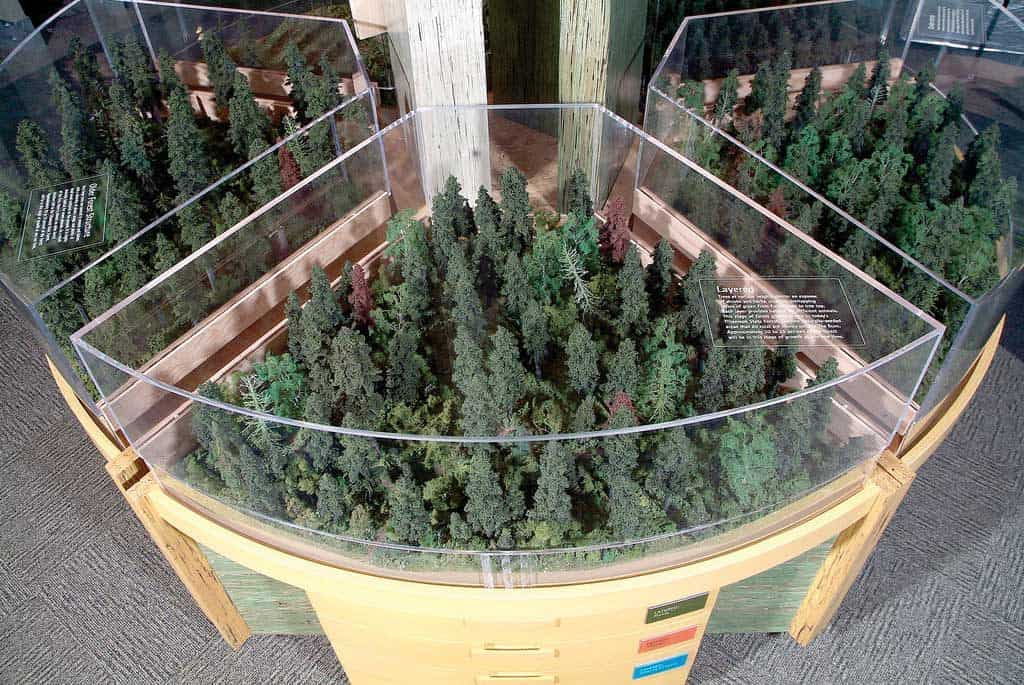 Taylor Studios fabricated a variety of exhibits for Tillamook Forest Interpretive Center. This includes a replica forest (shown here) illustrating five phases of forest development in succession.