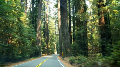 Read more about the article Our Redwood National Park Visiting Guide (With Pictures!)