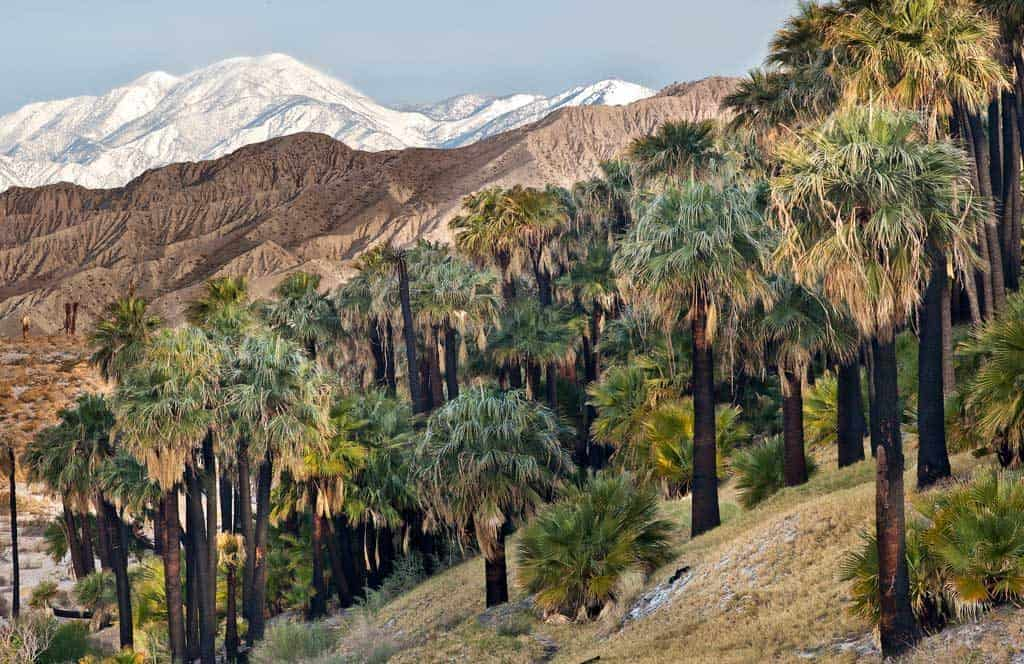 Coachella Valley Preserve System