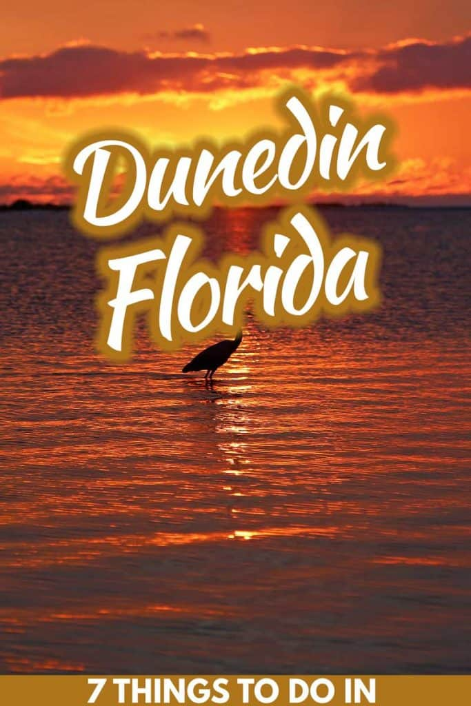 7 Best Things to Do in Dunedin, Florida
