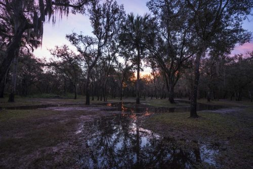 5 Cool Things to Do in Arcadia, Florida