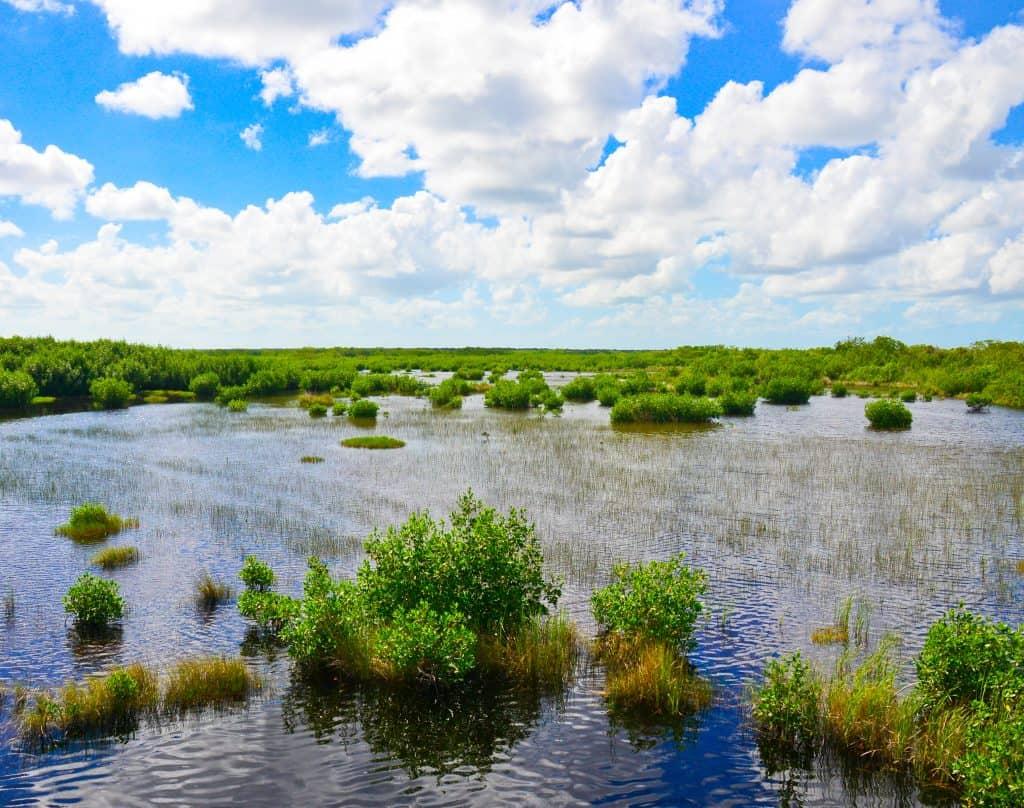 Ten Thousand Islands National Wildlife