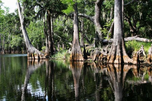 Everglades National Park: A Complete Visitor's Guide
