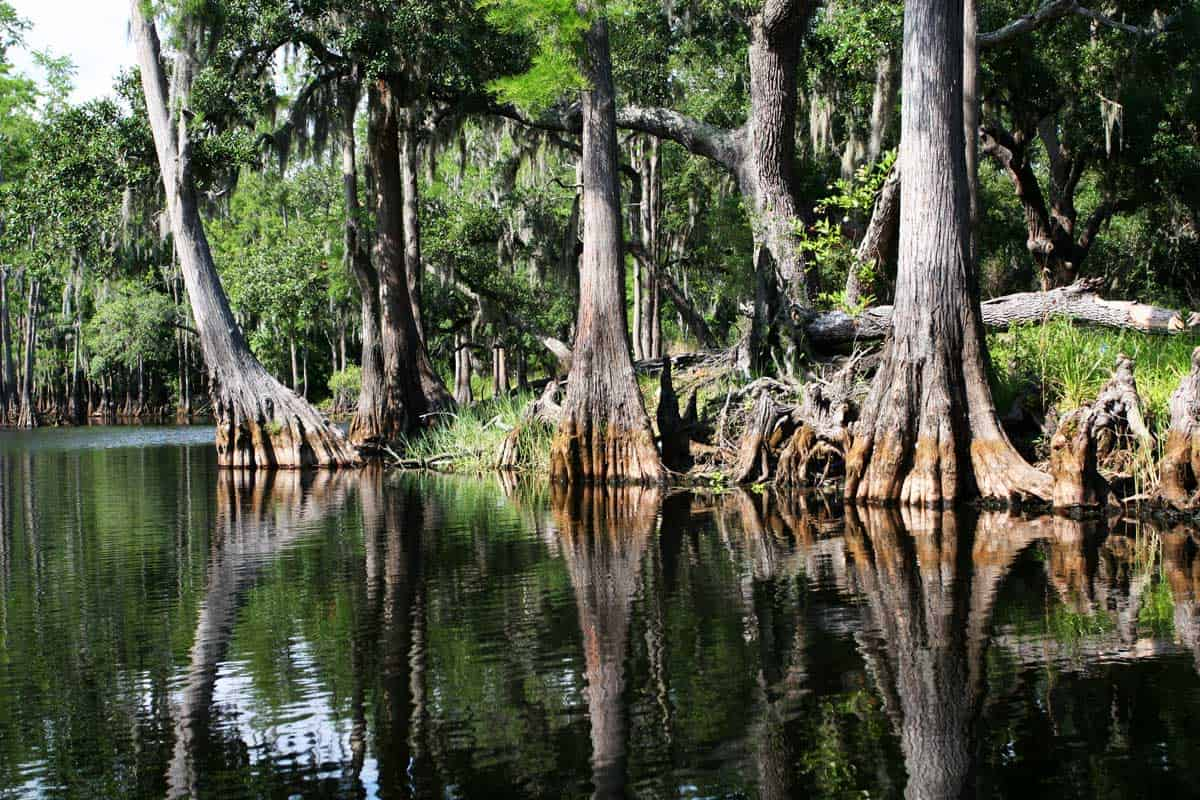Read more about the article Everglades National Park: A Complete Visitor's Guide