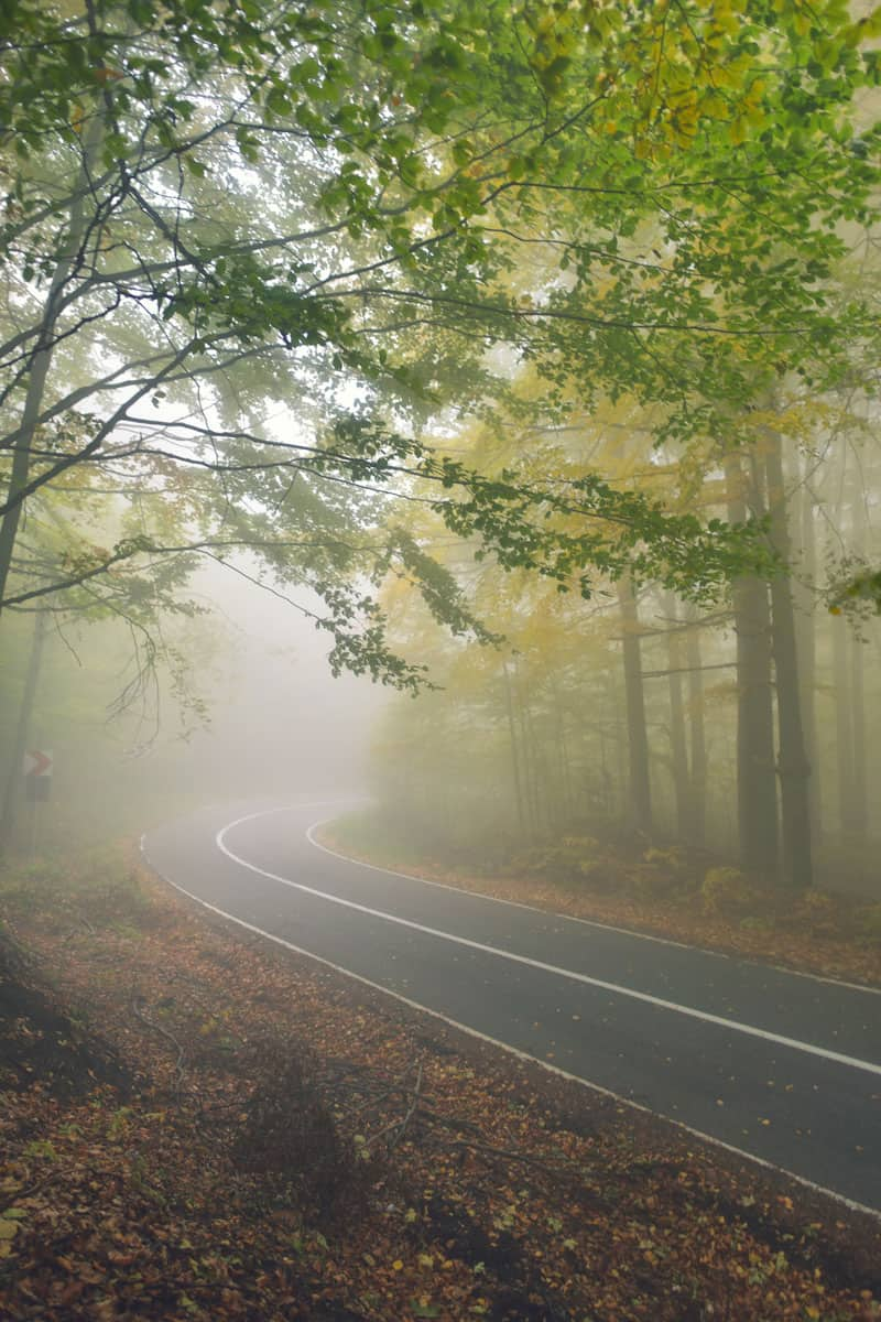 An-asphalt-road-that-goes-through-a-misty-dark-misterious-pine-forest