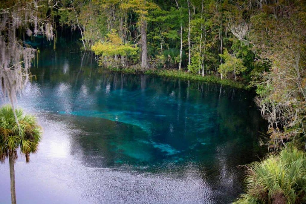 Crystal clear water surrounded by trees of Silver springs, Florida