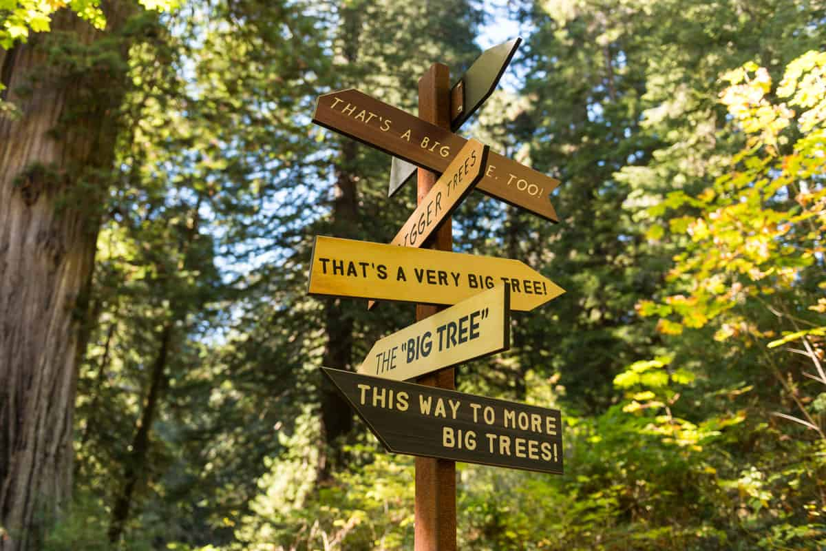Directions-of-big-trees-pointed-by-a-sign-in-Redwood-National-Park,-California,-USA