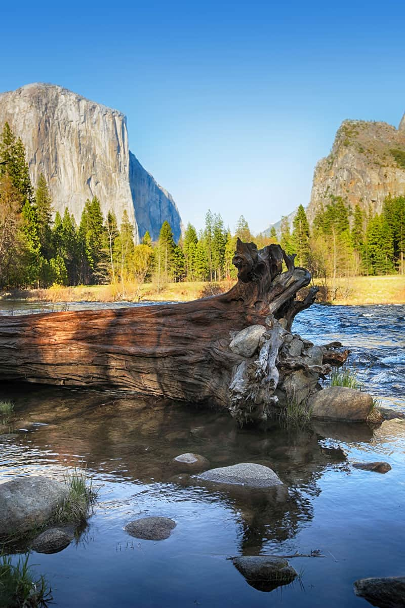 Fallen-tree-in-the-Merced-river-with-El-Capitan-and-the-Yosemite-Valley-in-the-background.