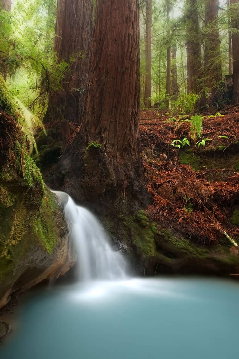 Small-waterfall-in-beautiful-California-redwood-forest