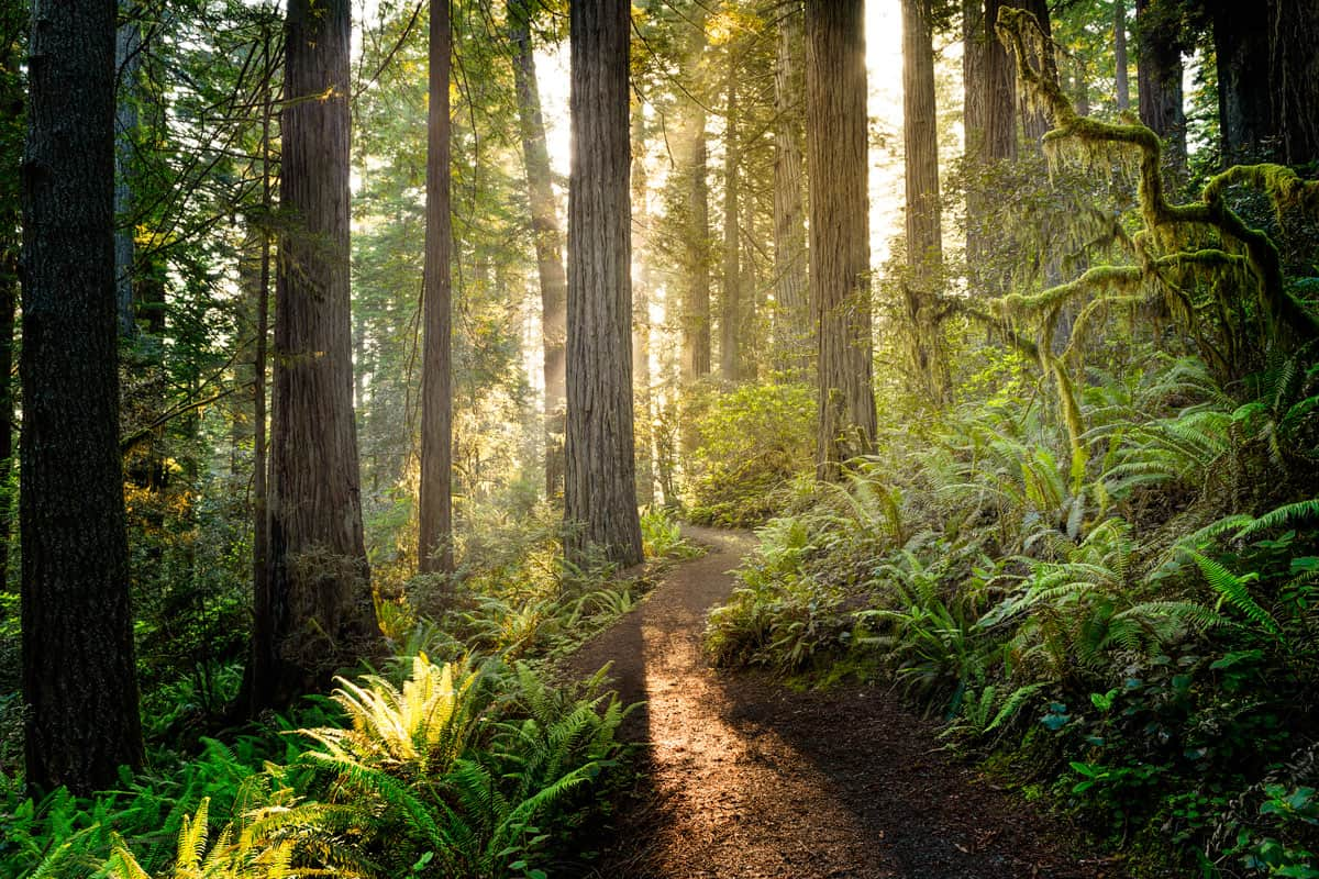 Sunrise-in-Redwood-National-Park