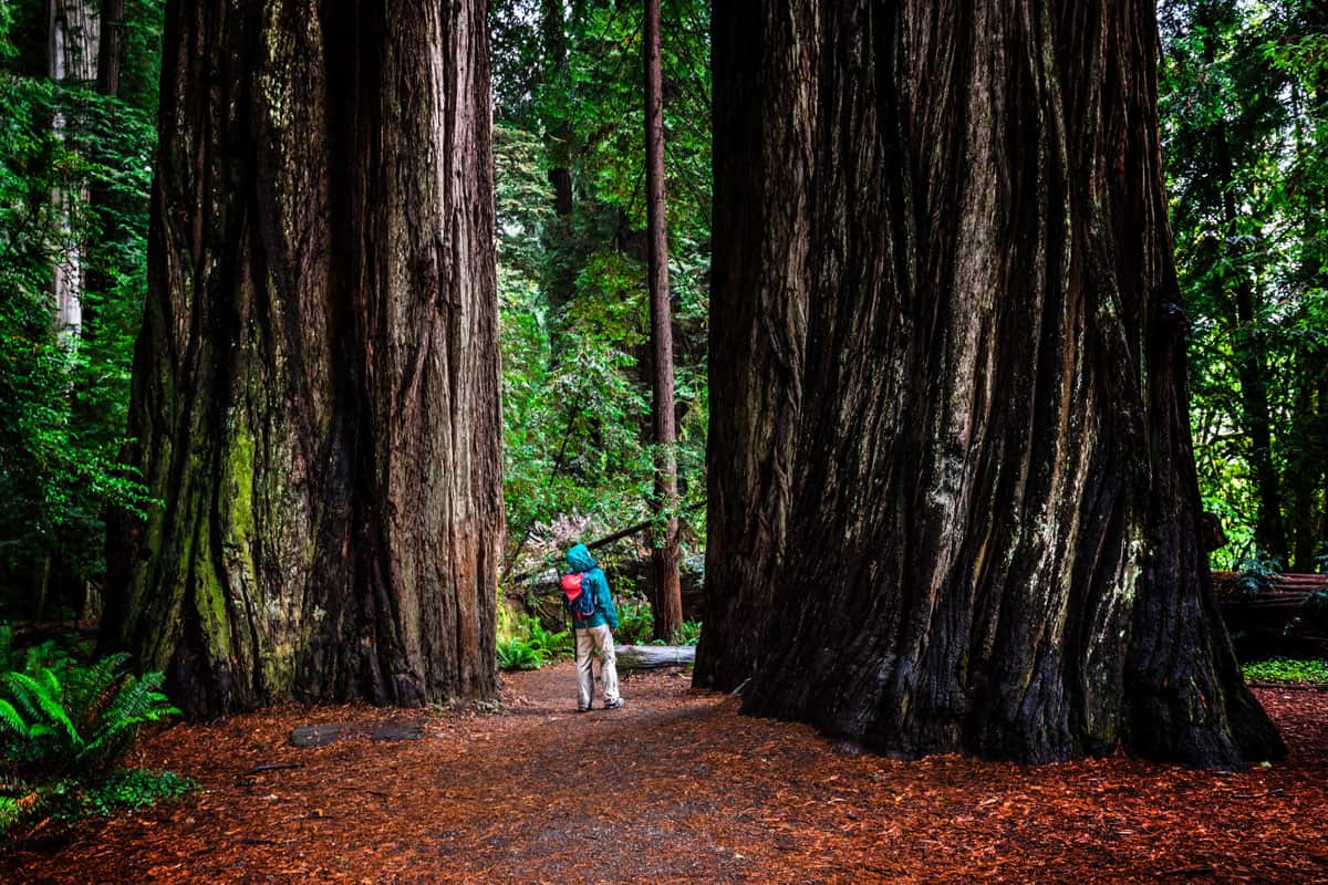 Woman-at-Stout-Grove-on-trail-through-the-Jedediah-Smith-Redwoods-State-Park-in-Northern-California,-USA