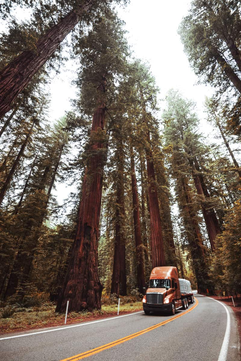redwood-national-forest-in-california