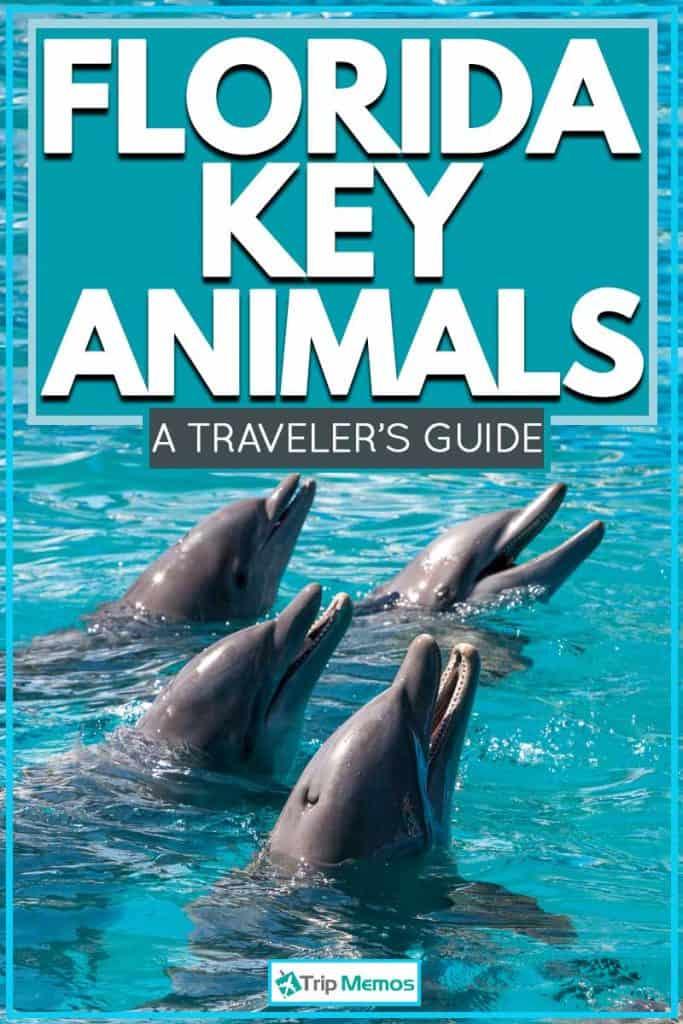 Florida Key Animals: A Traveler's Guide