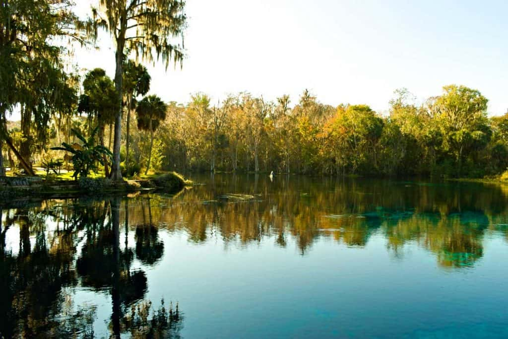 Big trees with dense vegetation reflecting the waters of SIlver Springs State Park