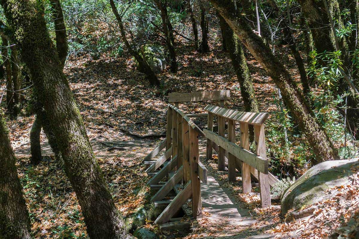 Narrow wooden bridge on a hiking trail, Castle Rock State Park