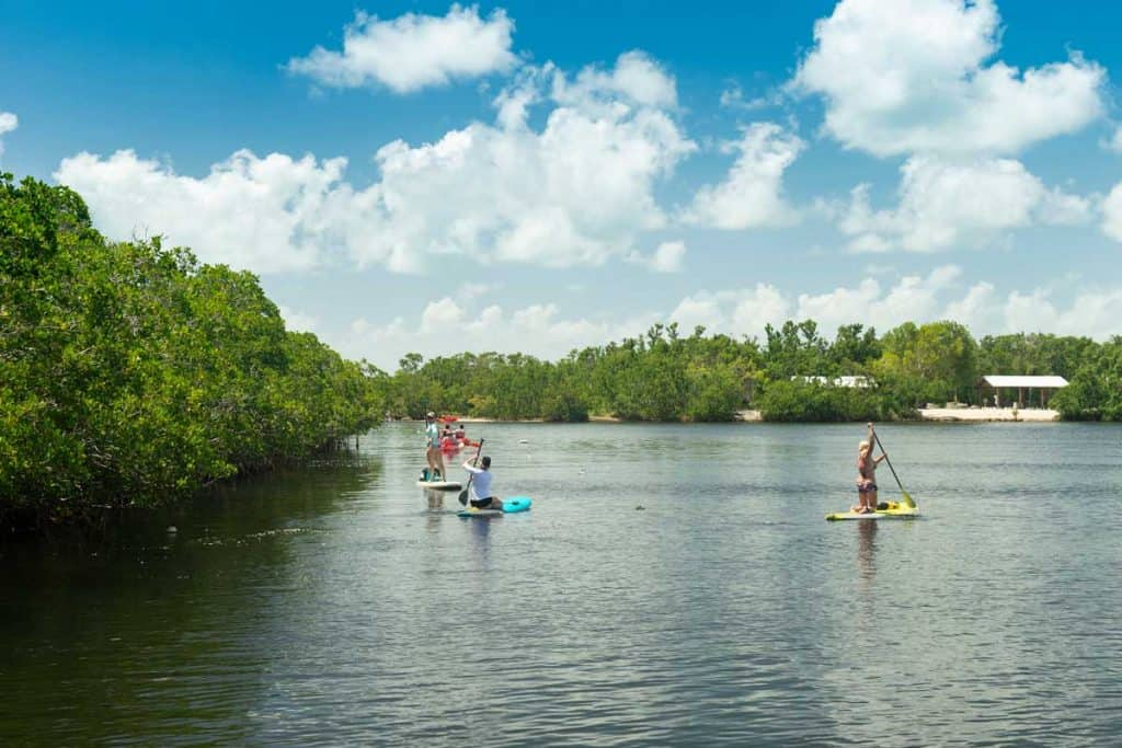 People standing at surf boards while paddling at John Pennekamp coral reef state park