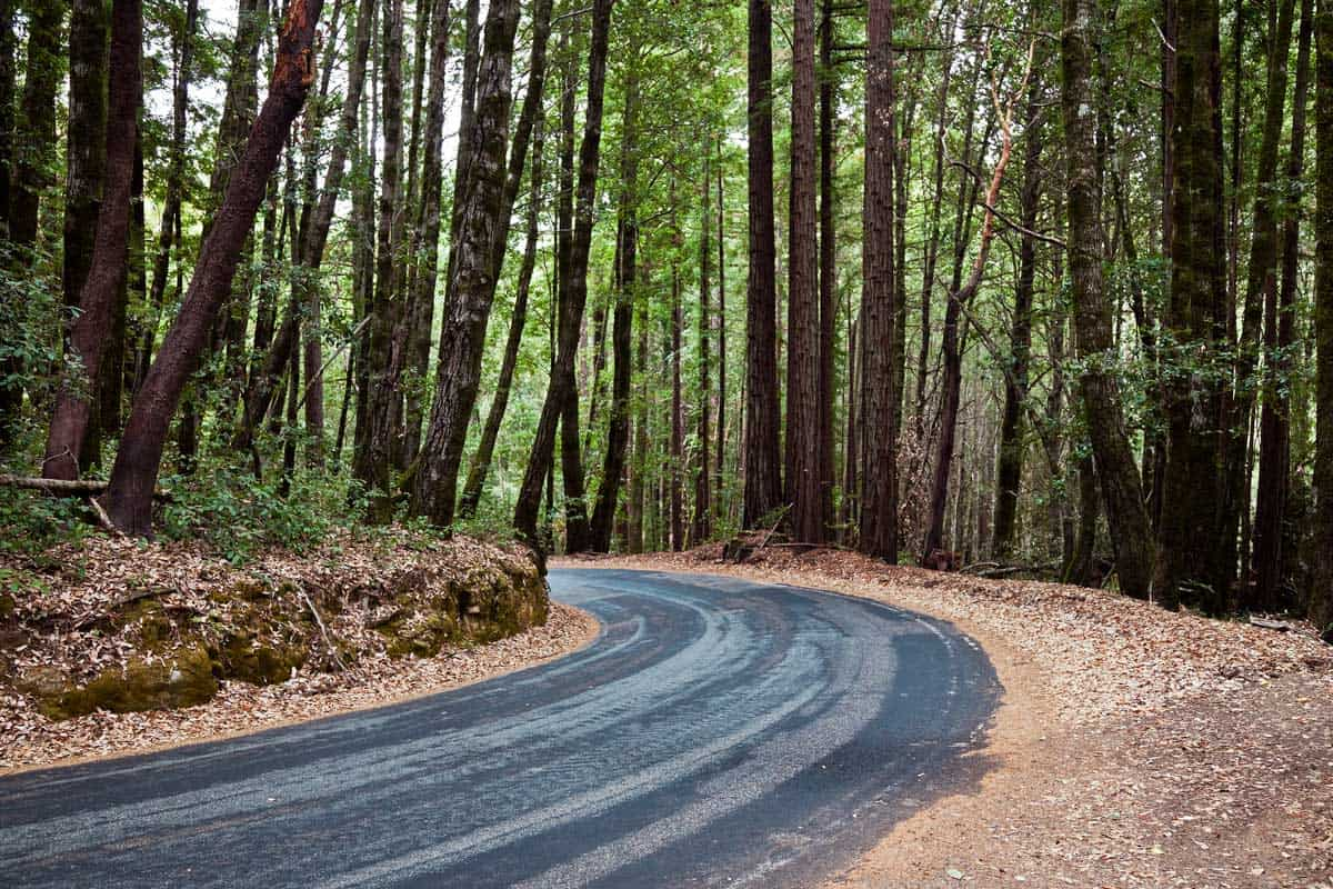 Huge Redwood trees and road in the middle at Big Basin Redwood State Park