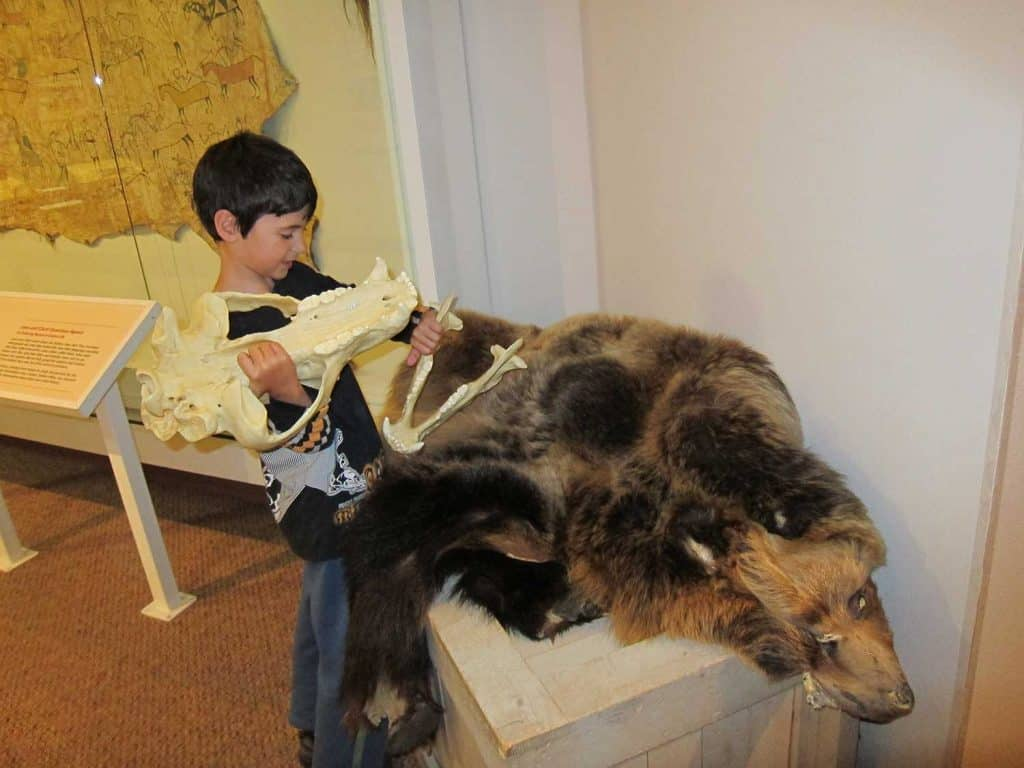 Kid holding a skull and checking out the bear fur at a museum