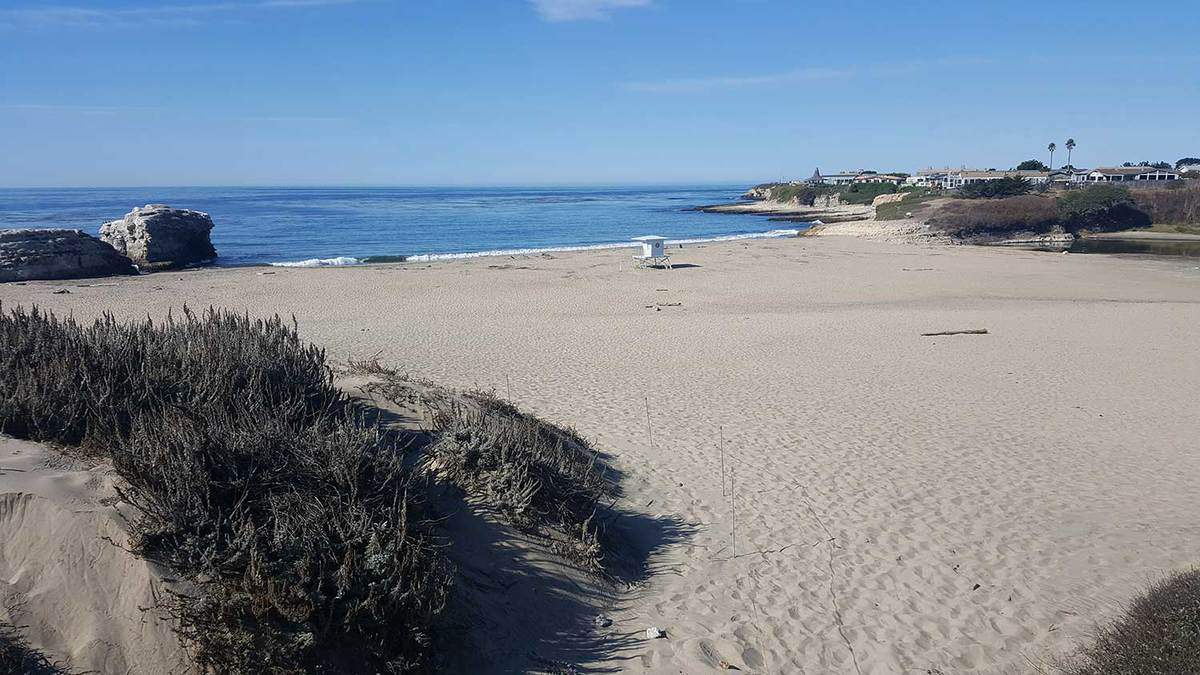 View of Natural Bridges State Beach during daytime
