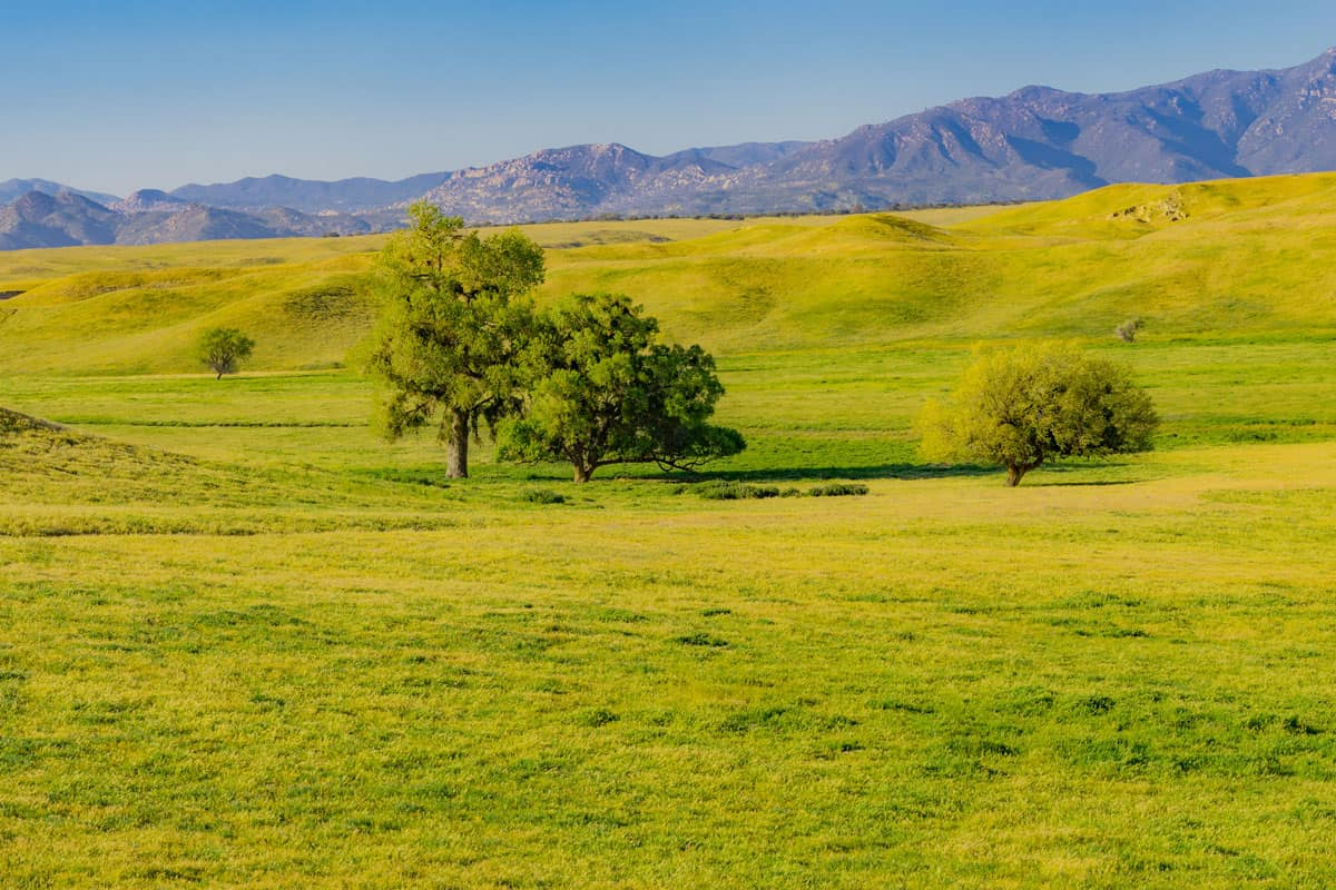 Green pasture in Lake Henshaw at Palomar mountains state park, California